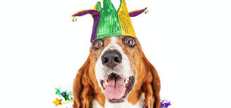 mardi gras dog 10 tips for celebrating mardi gras with your dog