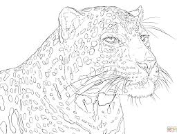 portrait of indian leopard coloring page free printable coloring