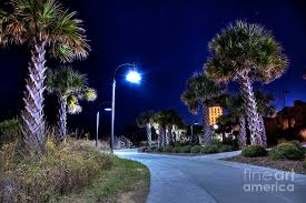 myrtle palm trees and lights photograph by robert loe