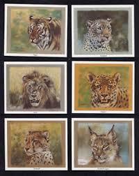 wild cats art lynx leopard tiger cheetah jaguar lion print trade