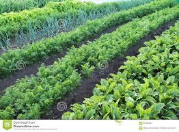 Vegetable Beds Garden With Vegetable Beds Stock Image Image Of Leaf 65935361