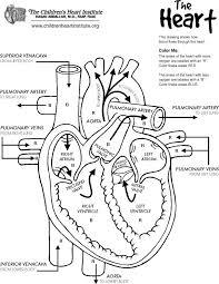 free heart diagram coloring printable