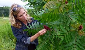 plants native to michigan west michigan herbalist lisa rose authors book about midwest