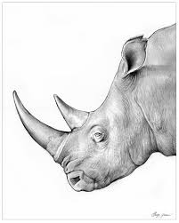 rhino drawing jpg 650 495 things i love u003c3 pinterest