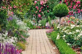 Decorative Plants For Home Plant Plants For Garden Notable Plants To You Com U201a Fabulous