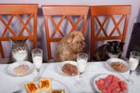 dogs at dinner table feeding cats and dogs in the same home waycooldogs com