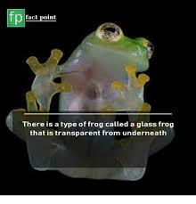 Fact Frog Meme - transparent lemon pie httpstcoyfgdqqvxjj transparent meme on