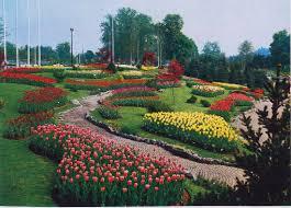 I tulipani presenti: uno spettacolo