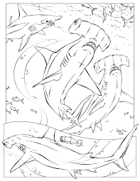 shark coloring pages national geographic in omeletta me