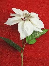white poinsettia poinsettia flower with glitter