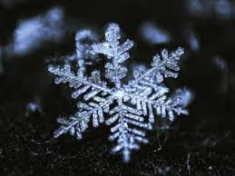 a new meaning of the word u0027snowflake u0027 merriam webster