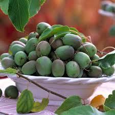 vines u0026 climbing fruit thompson u0026 morgan