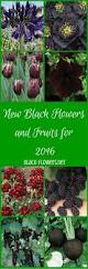 black flowers and fruits for 2016