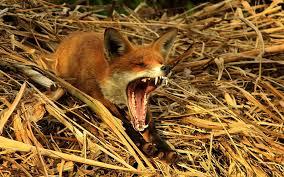 british wildlife photography walldevil