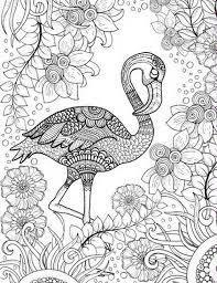 best 25 bird coloring pages ideas on pinterest bird by bird pdf