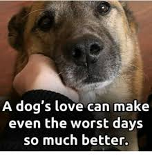 Much Dog Meme - a dog s love can make even the worst days so much better dogs