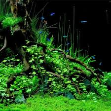 aquarium aqua scapes aquascape designs okc pools