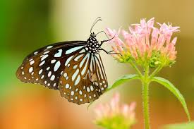 butterfly on flower pictures free images on unsplash
