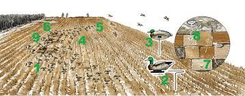 Mallards Duck Blind Waterfowl 9 Tips For Hunting Mallards In Cut Corn Fields Field