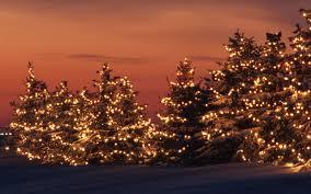 the wild trees in christmas lights on photos from minnesoita 2016 2017