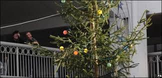 cbbc newsround uk britain s worst tree