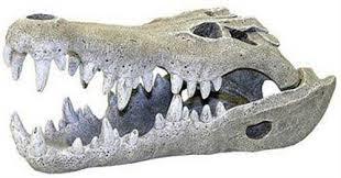 environments nile crocodile skull aquarium