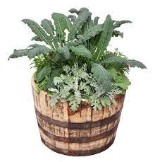 Herb Container Garden - kale flowers u0026 herbs container garden bonnie plants
