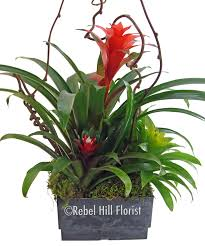 florist nashville tn bromeliad garden bromeliad garden rebel hill florist