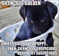 Puppy Meme - 12 best labrador memes of all time