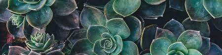 Where Can I Buy Rose Petals Large Flower Petals U2013 Anyone Can Craft