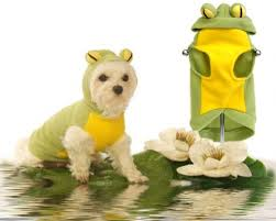 Halloween Costumes Small Dogs Frog Small Dog Halloween Costumes Frog Costume Small Medium Dogs