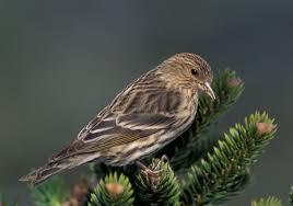 Indiana Birds images Indiana birding by season winter bird watcher 39 s digest jpg