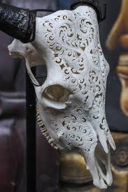 real cow skull horns home interior trophy deer decor elk bison questions