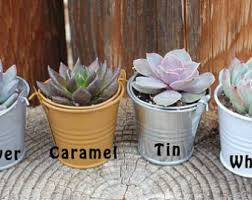 succulent wedding favors the succulent source by thesucculentsource on etsy