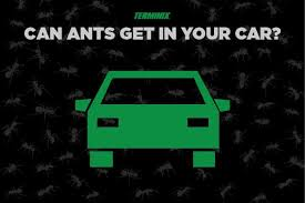 How To Kill Ants In The Kitchen by How To Get Rid Of An Ant Infestation Terminix