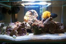Fluval Sea Marine And Reef Led Strip Lights by Fluval Edge Tank Thread Aquarium Journals Nano Reef Com Community