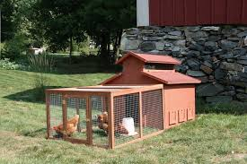 How To Raise Backyard Chickens For Eggs A Fresh Egg A Day Keeps The Doctor Away U2013 A Guide To Raising