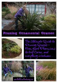pruning ornamental grasses the ultimate guide coast