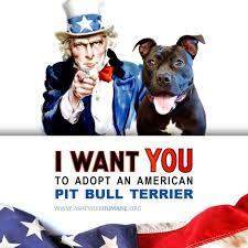 american pitbull terrier jaw pit bull myths dangerous dogs dogsbite org