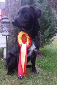 affenpinscher klubb norge tidligere utstillingsresultater gjeterhunder norsk pyreneerhundklubb