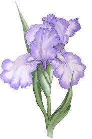 flower pro free transparent png files and paint shop pro