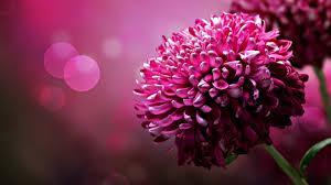 hd flower s wallpaper 1920x1080 7505