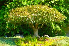 best trees for landscaping photos ideas reviews