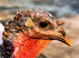 reasons to rethink turkey this thanksgiving