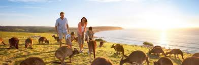 australia tourism bureau there s nothing like australia corporate tourism australia