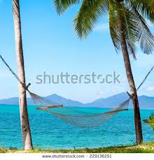 hammock under the palm trees stock images royalty free images