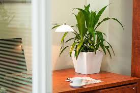 Indoor Plant For Office Desk Desk Plants Osborne Plant Service