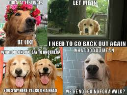 Golden Retriever Meme - 19 of the very best golden retriever memes dog breeds pup and dog
