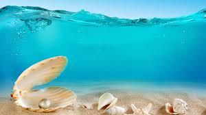 1920x1080 sea seashell ocean 1080p full hd wallpapers