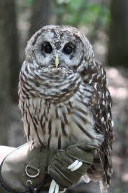 wildlife center program on january 29 at virginia beach wild birds